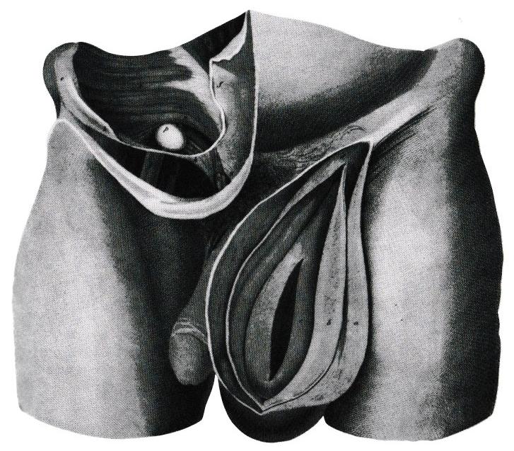 Ernia disegno di Astley Cooper 1804