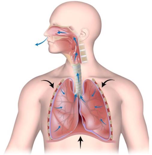 espirazione polmonare